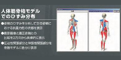 「縮んで圧迫されている筋肉」と「伸ばされている筋肉」がわかる